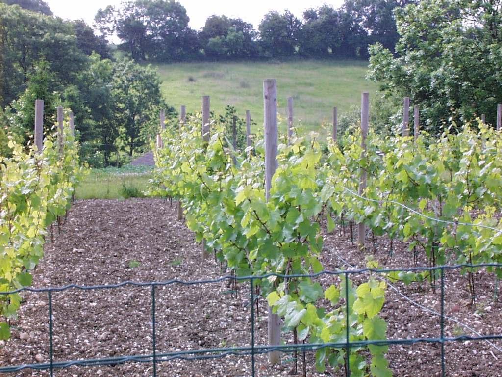 La vigne - Traitement de la vigne ...